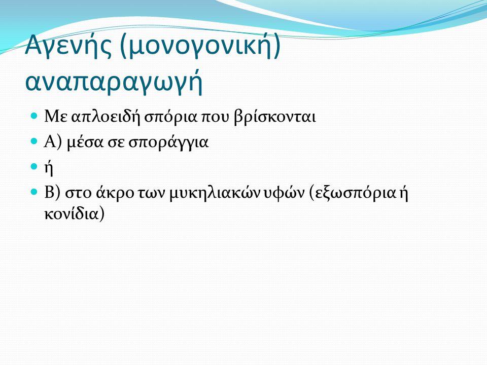 Αγενής (μονογονική) αναπαραγωγή Με απλοειδή σπόρια που βρίσκονται Α) μέσα σε σποράγγια ή Β) στο άκρο των μυκηλιακών υφών (εξωσπόρια ή κονίδια)