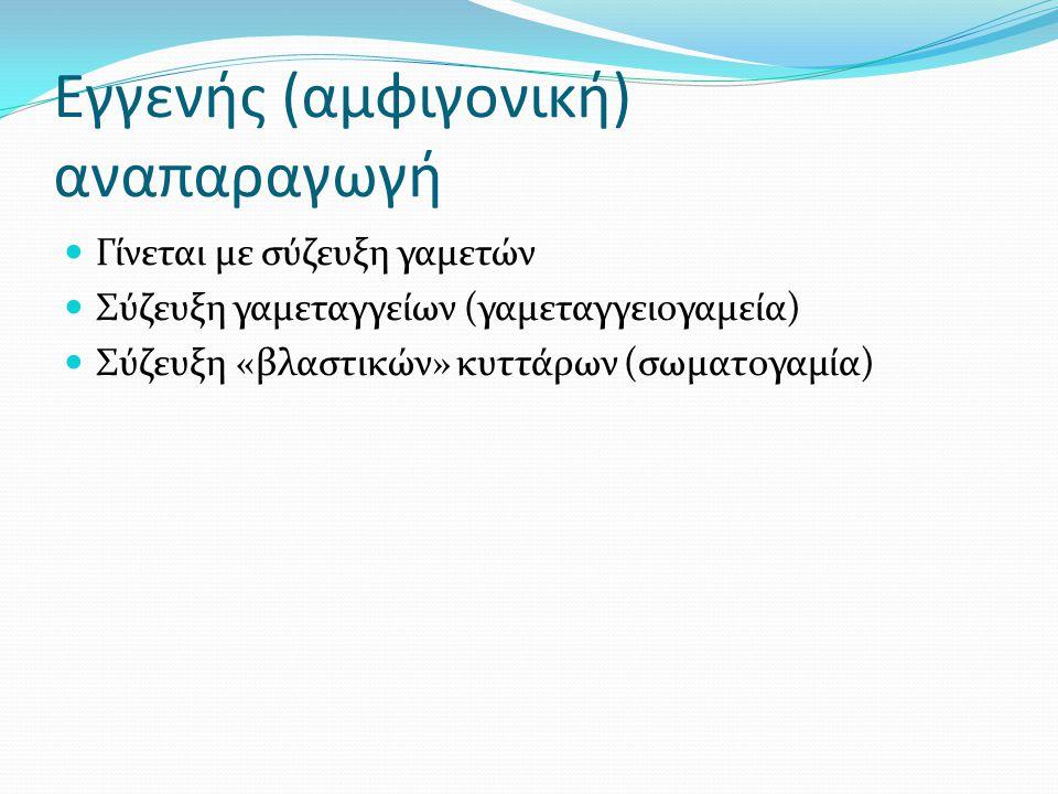 Εγγενής (αμφιγονική) αναπαραγωγή Γίνεται με σύζευξη γαμετών Σύζευξη γαμεταγγείων (γαμεταγγειογαμεία) Σύζευξη «βλαστικών» κυττάρων (σωματογαμία)