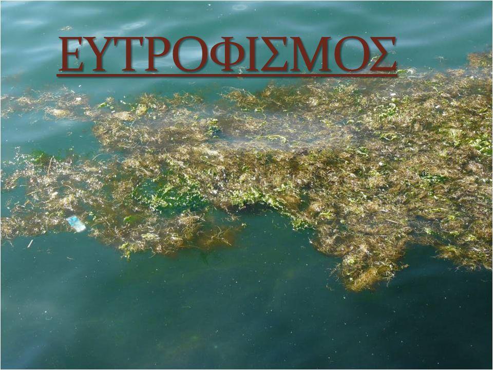 ΕΥΤΡΟΦΙΣΜΟΣ Ο ευτροφισμός είναι περιβαλλοντικό πρόβλημα που παρουσιάζεται σε λίμνες ή κλειστούς αβαθείς κόλπους κάτω από ορισμένες συνθήκες.