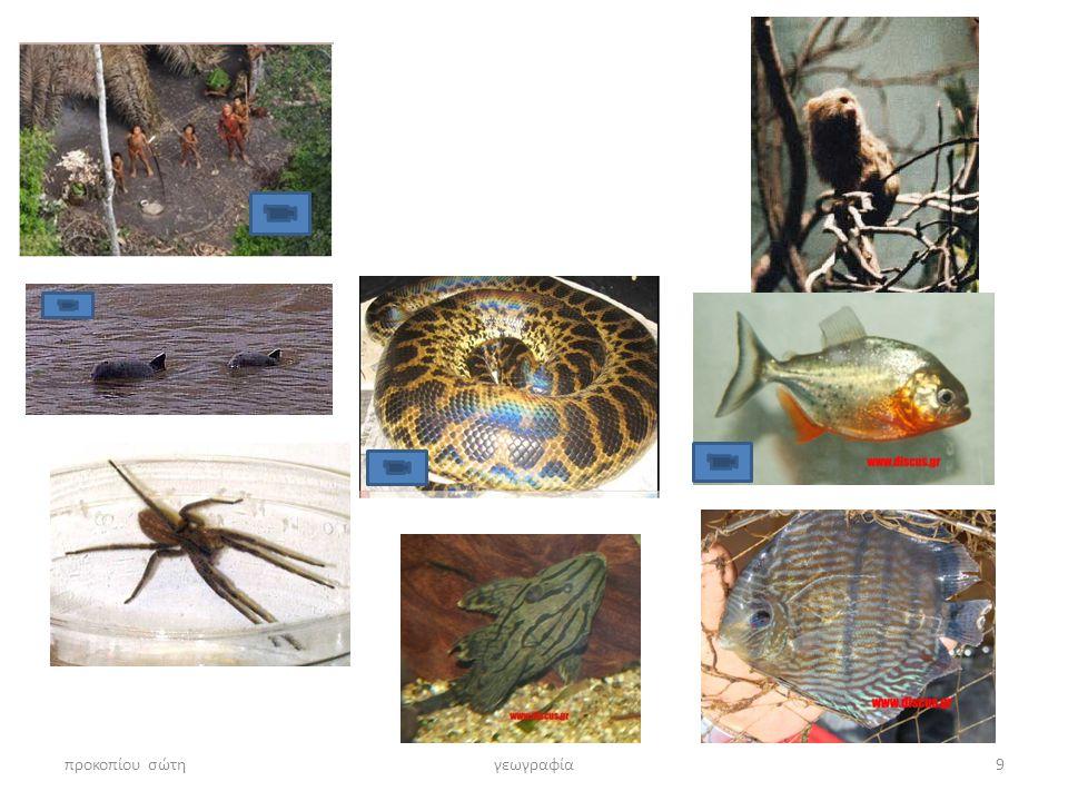 προκοπίου σώτηγεωγραφία10 Αμαζόνιος