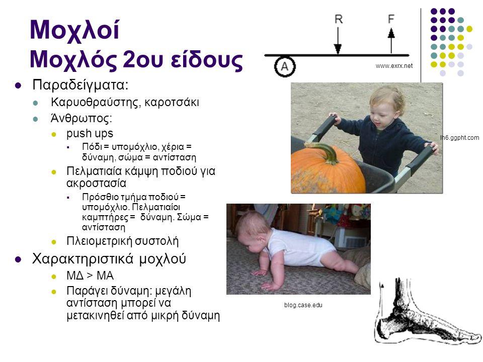 Μοχλοί Μοχλός 2ου είδους Παραδείγματα: Καρυοθραύστης, καροτσάκι Άνθρωπος: push ups  Πόδι = υπομόχλιο, χέρια = δύναμη, σώμα = αντίσταση Πελματιαία κάμψη ποδιού για ακροστασία  Πρόσθιο τμήμα ποδιού = υπομόχλιο.
