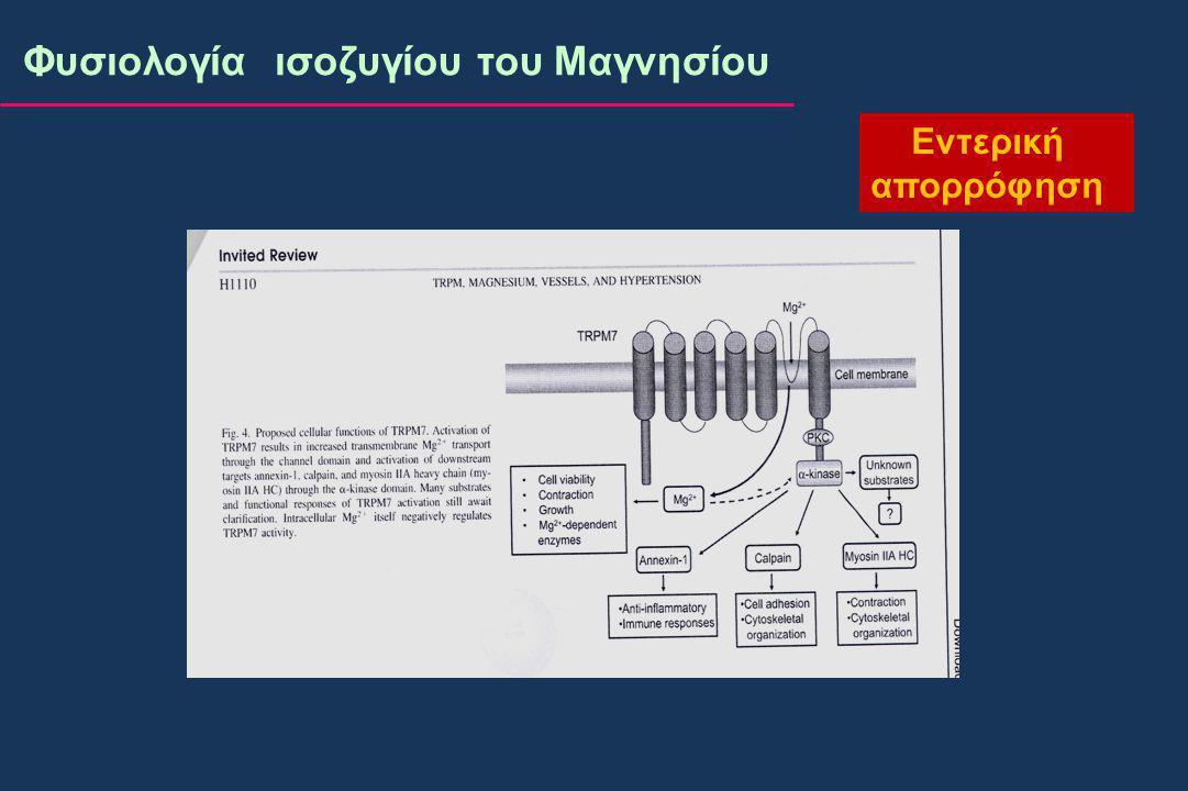 Φυσιολογία ισοζυγίου του Μαγνησίου Εντερική απορρόφηση