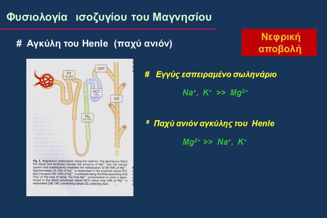 Φυσιολογία ισοζυγίου του Μαγνησίου Νεφρική αποβολή # Αγκύλη του Henle (παχύ ανιόν) # Εγγύς εσπειραμένο σωληνάριο Na +, K + >> Mg 2+ # Παχύ ανιόν αγκύλης του Henle Mg 2+ >> Na +, K +