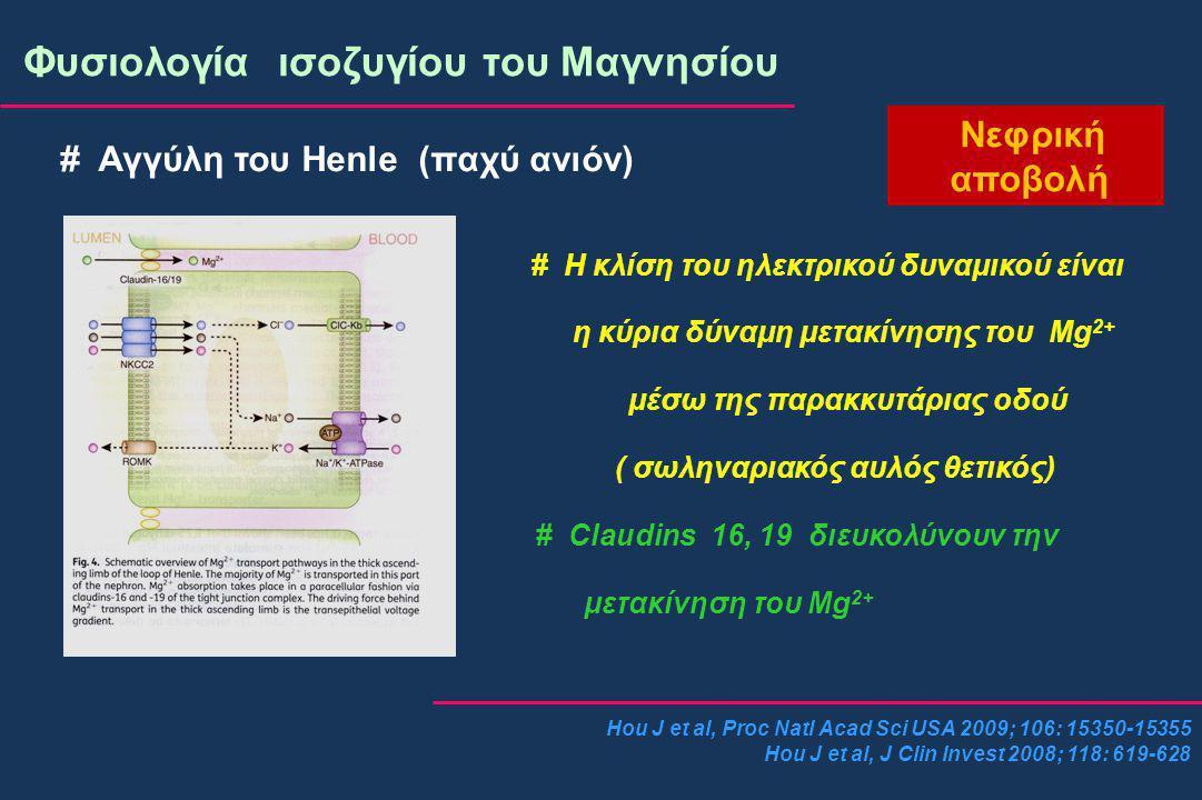 Hou J et al, Proc Natl Acad Sci USA 2009; 106: 15350-15355 Hou J et al, J Clin Invest 2008; 118: 619-628 Φυσιολογία ισοζυγίου του Μαγνησίου Νεφρική αποβολή # Αγγύλη του Henle (παχύ ανιόν) # Η κλίση του ηλεκτρικού δυναμικού είναι η κύρια δύναμη μετακίνησης του Mg 2+ μέσω της παρακκυτάριας οδού ( σωληναριακός αυλός θετικός) # Claudins 16, 19 διευκολύνουν την μετακίνηση του Mg 2+