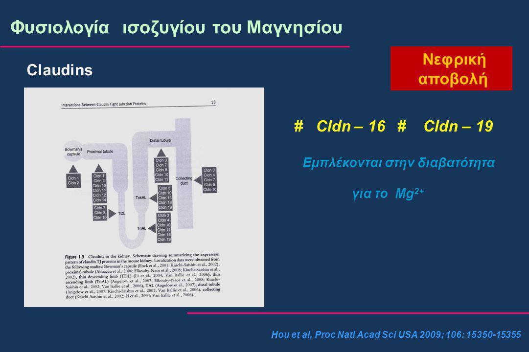 Φυσιολογία ισοζυγίου του Μαγνησίου Νεφρική αποβολή Claudins # Cldn – 16 # Cldn – 19 Εμπλέκονται στην διαβατότητα για το Mg 2+ Hou et al, Proc Natl Acad Sci USA 2009; 106: 15350-15355