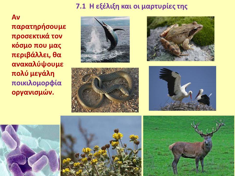 7.1 Η εξέλιξη και οι μαρτυρίες της Αν παρατηρήσουμε προσεκτικά τον κόσμο που μας περιβάλλει, θα ανακαλύψουμε πολύ μεγάλη ποικιλομορφία οργανισμών.