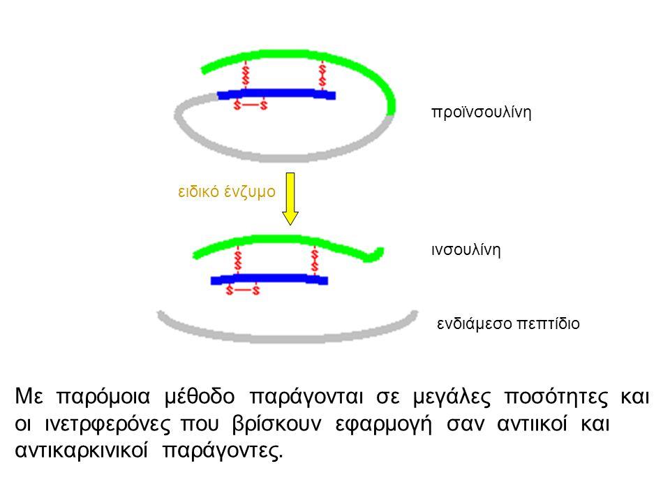 Στάδια κατασκευής ινσουλίνης από βακτήρια 1.Απομόνωση του συνολικού mRNA από κύτταρα του παγκρέατος 2.mRNA-cDNA ( αντίστροφη μεταγραφάση ) 3.Αποδιάταξη του υβριδικού μορίου mRNA-cDNA 4.Από cDNA → δίκλωνο DNA 5.Το δίκλωνο DNA εισάγεται σε πλασμίδια 6.Τα πλασμίδια εισάγονται σε βακτήρια ( μετασχηματισμός) 7.καλλιέργεια των βακτηρίων σε θρεπτικό υλικό που περιέχει αντιβιοτικό 8.Προσδιορίζονται τα βακτήρια που έχουν δεχθεί πλασμίδιο.