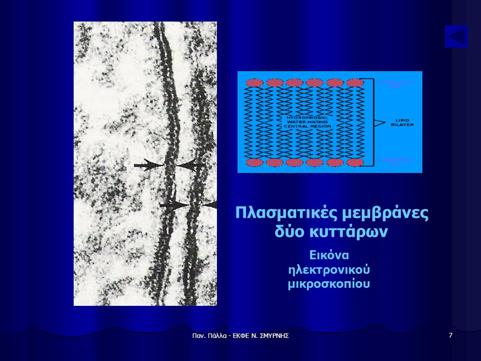 Παν. Πάλλα - ΕΚΦΕ Ν. ΣΜΥΡΝΗΣ 7 Πλασματικές μεμβράνες δύο κυττάρων Εικόνα ηλεκτρονικού μικροσκοπίου
