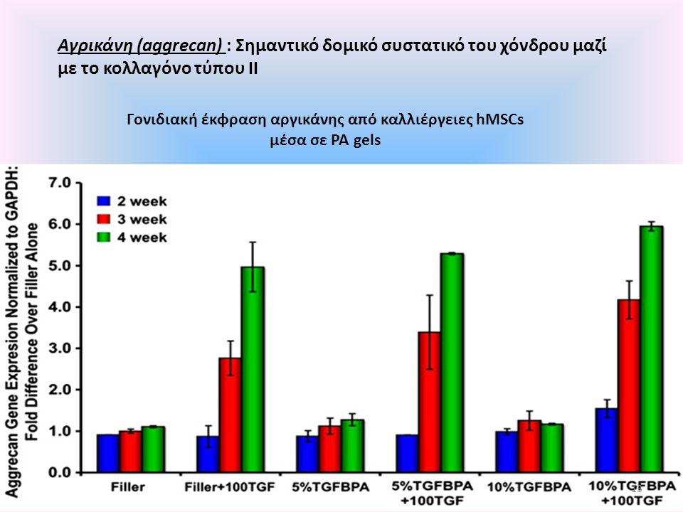 Αγρικάνη (aggrecan) : Σημαντικό δομικό συστατικό του χόνδρου μαζί με το κολλαγόνο τύπου II Γονιδιακή έκφραση αργικάνης από καλλιέργειες hMSCs μέσα σε