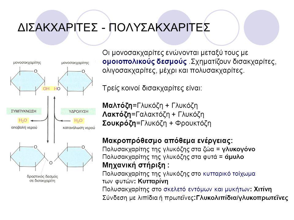 ΔΙΣΑΚΧΑΡΙΤΕΣ - ΠΟΛΥΣΑΚΧΑΡΙΤΕΣ Οι μονοσακχαρίτες ενώνονται μεταξύ τους με ομοιοπολικούς δεσμούς.Σχηματίζουν δισακχαρίτες, ολιγοσακχαρίτες, μέχρι και πολυσακχαρίτες.