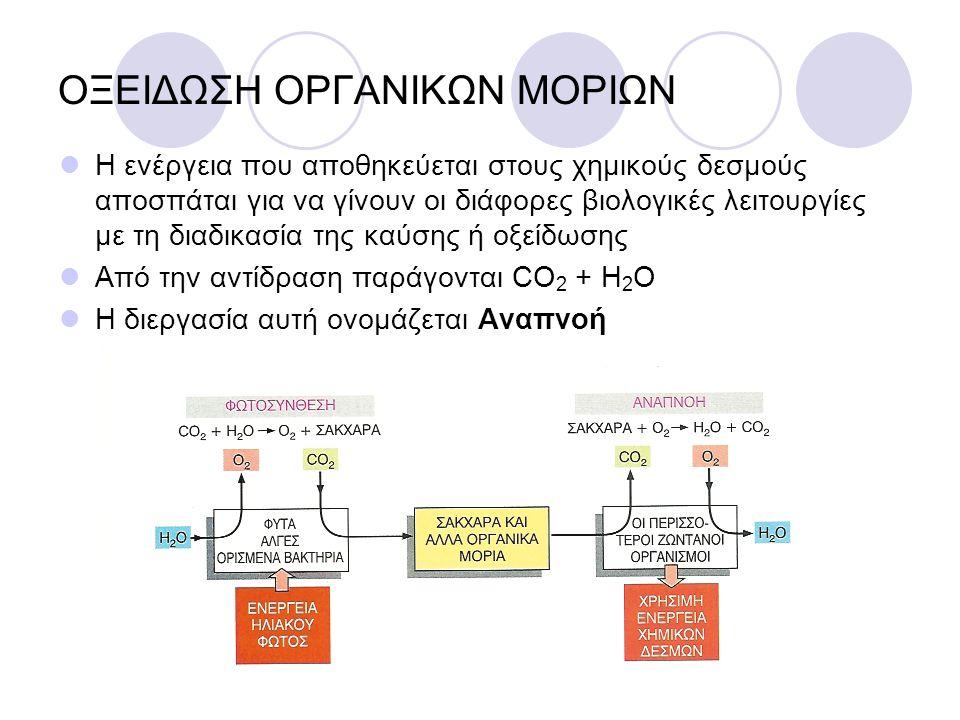 ΟΞΕΙΔΩΣΗ ΟΡΓΑΝΙΚΩΝ ΜΟΡΙΩΝ Η ενέργεια που αποθηκεύεται στους χημικούς δεσμούς αποσπάται για να γίνουν οι διάφορες βιολογικές λειτουργίες με τη διαδικασία της καύσης ή οξείδωσης Από την αντίδραση παράγονται CO 2 + Η 2 O Η διεργασία αυτή ονομάζεται Αναπνοή