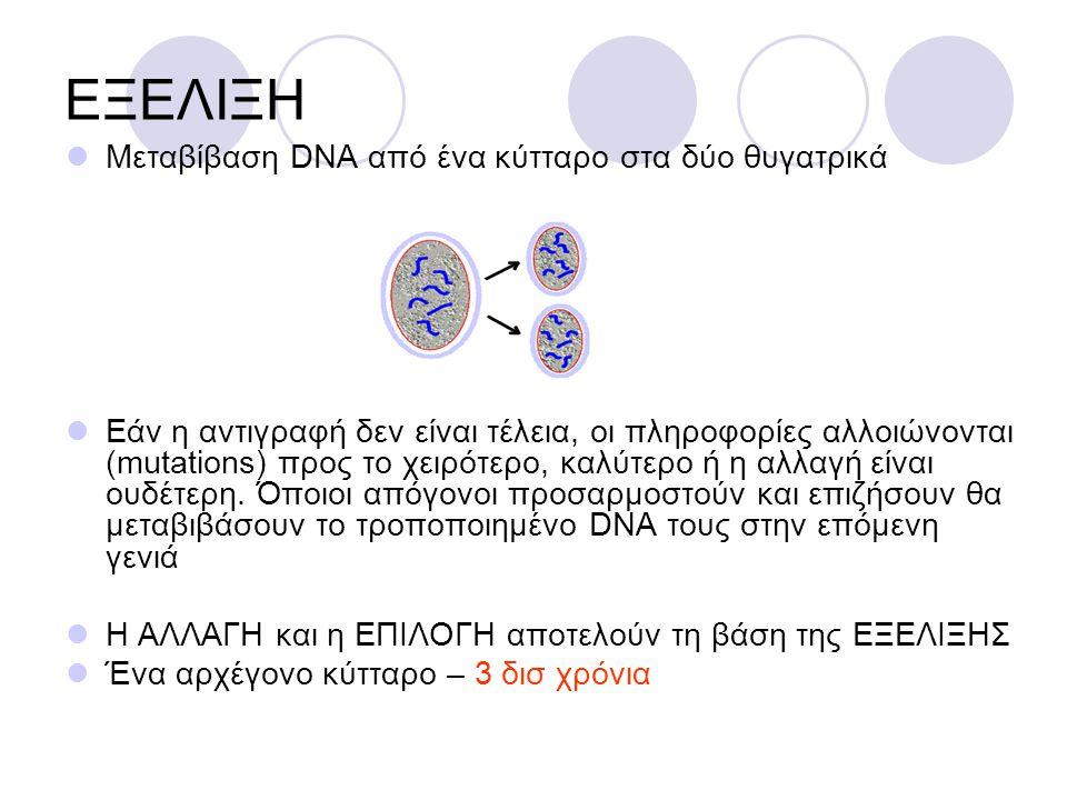 ΕΞΕΛΙΞΗ Μεταβίβαση DNA από ένα κύτταρο στα δύο θυγατρικά Εάν η αντιγραφή δεν είναι τέλεια, οι πληροφορίες αλλοιώνονται (mutations) προς το χειρότερο, καλύτερο ή η αλλαγή είναι ουδέτερη.