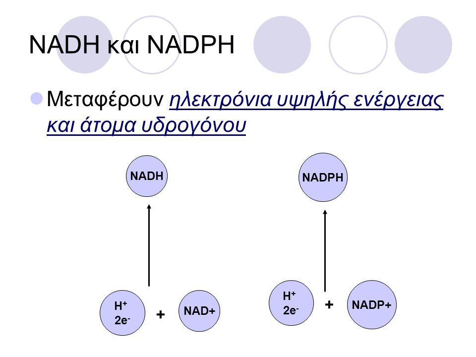 NADH και NADPH Μεταφέρουν ηλεκτρόνια υψηλής ενέργειας και άτομα υδρογόνου NADH H + 2e - + NAD+ NADPH H + 2e - + NADP+