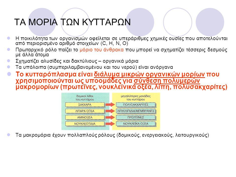 ATP Είναι το σημαντικότερο ενεργοποιημένο μόριο φορέας (απόθεμα ενέργειας) Φωσφορυλίωση: μεταφορά φωσφορικής ομάδας P ATP ADP + ΕΝΕΡΓΕΙΑ ΑΠΟ ΦΩΣ Ή ΤΡΟΦΕΣ ΕΝΕΡΓΕΙΑ ΔΙΑΘΕΣΙΜΗ ΓΙΑ ΔΡΑΣΤΗΡΙΟΤΗΤΑ Η ΧΗΜΙΚΕΣ ΣΥΝΘΕΣΕΙΣ