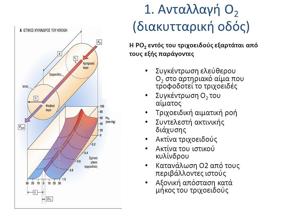 1. Ανταλλαγή Ο 2 (διακυτταρική οδός) H PO 2 εντός του τριχοειδούς εξαρτάται από τους εξής παράγοντες Συγκέντρωση ελεύθερου Ο 2 στο αρτηριακό αίμα που