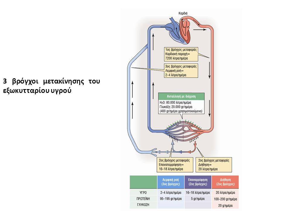 3 βρόγχοι μετακίνησης του εξωκυτταρίου υγρού