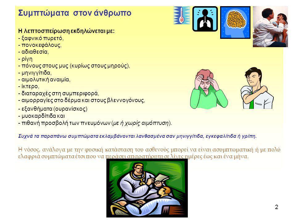2 Συμπτώματα στον άνθρωπο Η λεπτοσπείρωση εκδηλώνεται με: - ξαφνικό πυρετό, - πονοκεφάλους, - αδιαθεσία, - ρίγη - πόνους στους μυς (κυρίως στους μηρού