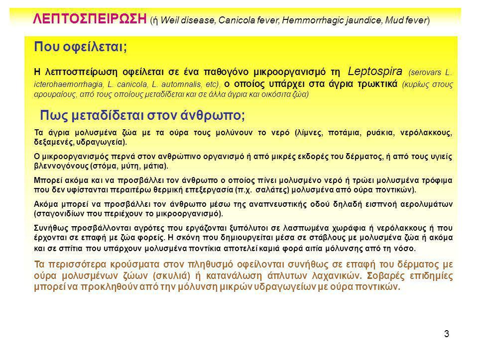 3 Που οφείλεται; Η λεπτοσπείρωση οφείλεται σε ένα παθογόνο μικροοργανισμό τη Leptospira (serovars L. icterohaemorrhagia, L. canicola, L. automnalis, e