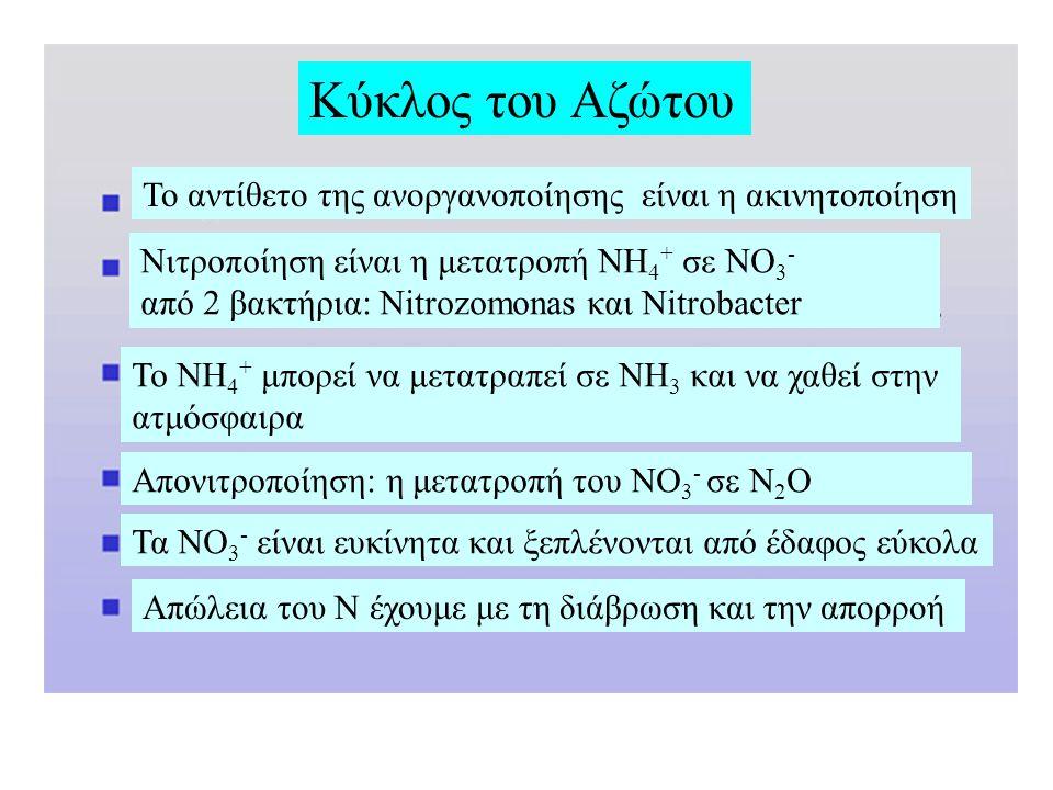 Το αντίθετο της ανοργανοποίησης είναι η ακινητοποίηση Νιτροποίηση είναι η μετατροπή NH 4 + σε NO 3 - από 2 βακτήρια: Nitrozomonas και Nitrobacter To NH 4 + μπορεί να μετατραπεί σε NH 3 και να χαθεί στην ατμόσφαιρα Απονιτροποίηση: η μετατροπή του NO 3 - σε N 2 O Τα NO 3 - είναι ευκίνητα και ξεπλένονται από έδαφος εύκολα Απώλεια του Ν έχουμε με τη διάβρωση και την απορροή Κύκλος του Αζώτου