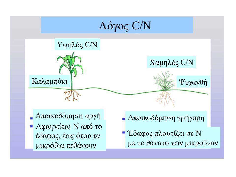 Αποικοδόμηση αργή Αφαιρείται Ν από το έδαφος, έως ότου τα μικρόβια πεθάνουν Αποικοδόμηση γρήγορη Έδαφος πλουτίζει σε Ν με το θάνατο των μικροβίων Λόγος C/N Yψηλός C/N Χαμηλός C/N Καλαμπόκι Ψυχανθή