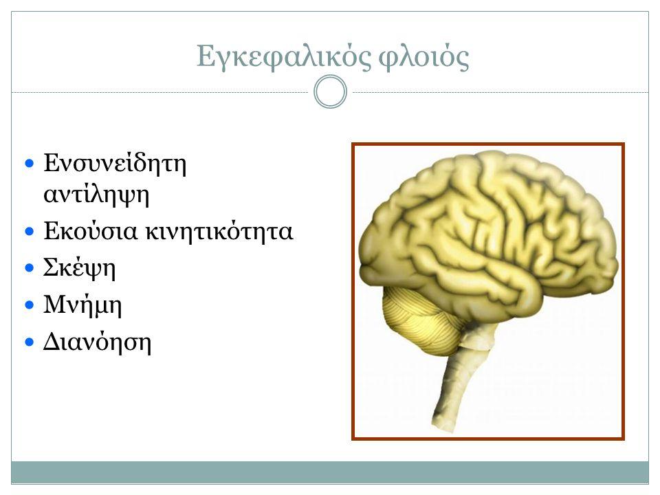 Εγκεφαλικός φλοιός Ενσυνείδητη αντίληψη Εκούσια κινητικότητα Σκέψη Μνήμη Διανόηση