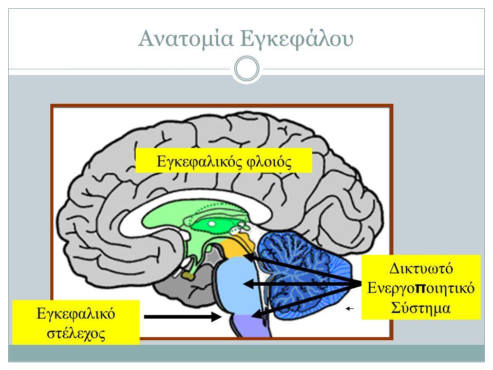 Ανατομία Εγκεφάλου Εγκεφαλικός φλοιός Εγκεφαλικό στέλεχος Δικτυωτό Ενεργο π οιητικό Σύστημα