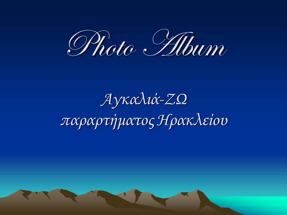 Photo Album Αγκαλιά-ΖΩ παραρτήματος Ηρακλείου
