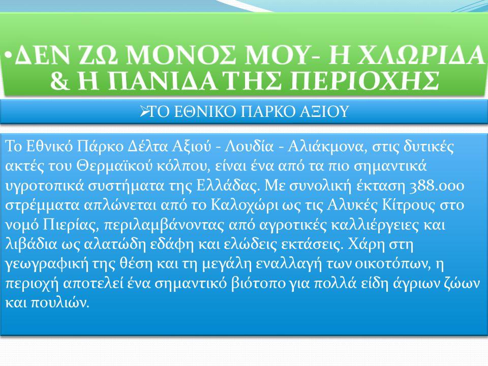  ΤΟ ΕΘΝΙΚΟ ΠΑΡΚΟ ΑΞΙΟΥ Το Εθνικό Πάρκο Δέλτα Αξιού - Λουδία - Αλιάκμονα, στις δυτικές ακτές του Θερμαϊκού κόλπου, είναι ένα από τα πιο σημαντικά υγροτοπικά συστήματα της Ελλάδας.