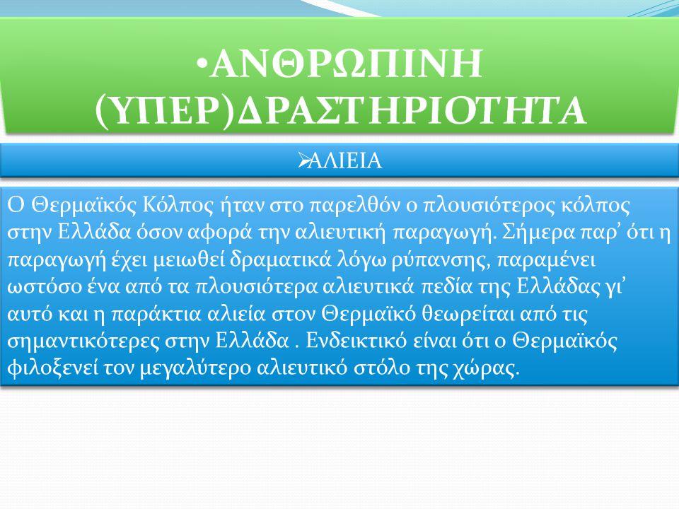 ΑΛΙΕΙΑ Ο Θερμαϊκός Κόλπος ήταν στο παρελθόν ο πλουσιότερος κόλπος στην Ελλάδα όσον αφορά την αλιευτική παραγωγή.