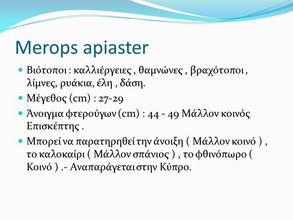 Merops apiaster Βιότοποι : καλλιέργειες, θαμνώνες, βραχότοποι, λίμνες, ρυάκια, έλη, δάση.
