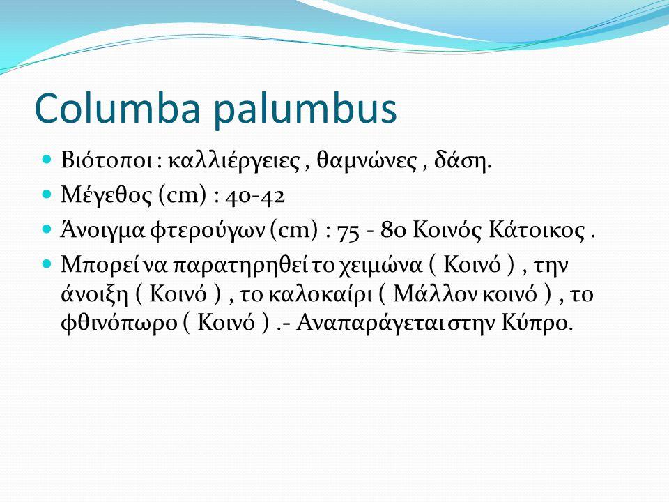 Columba palumbus Βιότοποι : καλλιέργειες, θαμνώνες, δάση.