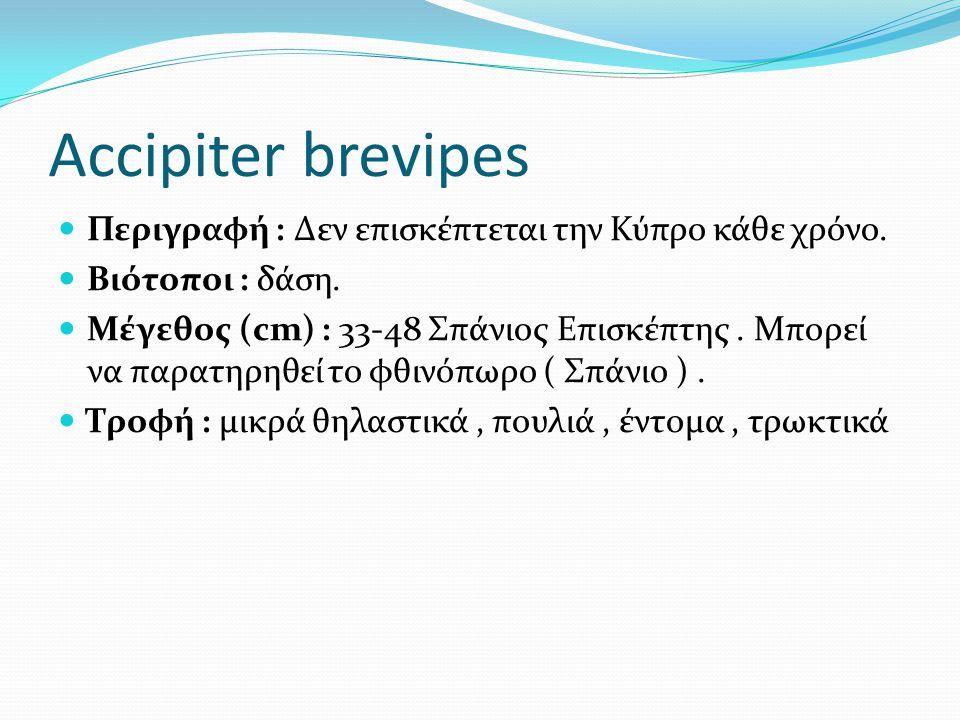 Accipiter brevipes Περιγραφή : Δεν επισκέπτεται την Κύπρο κάθε χρόνο.