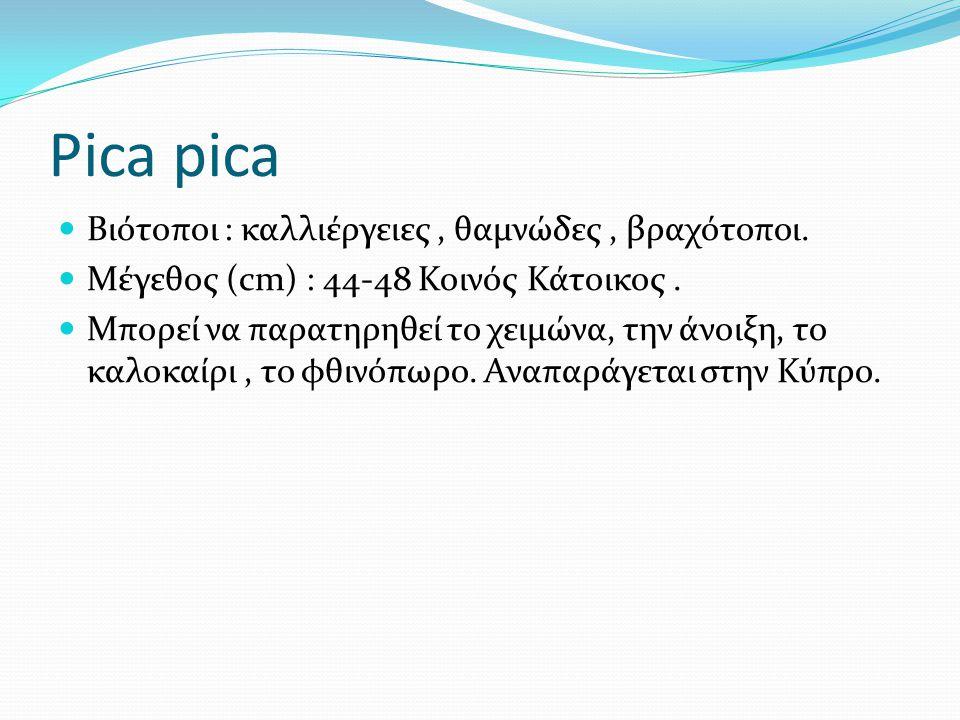 Pica pica Βιότοποι : καλλιέργειες, θαμνώδες, βραχότοποι.