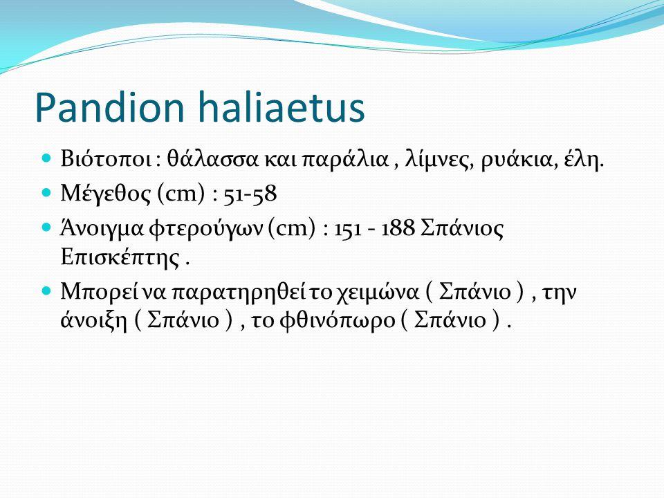 Pandion haliaetus Βιότοποι : θάλασσα και παράλια, λίμνες, ρυάκια, έλη.