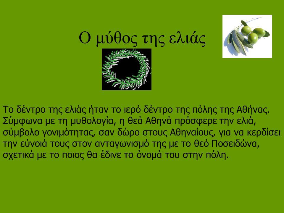 Ο μύθος της ελιάς Το δέντρο της ελιάς ήταν το ιερό δέντρο της πόλης της Αθήνας. Σύμφωνα με τη μυθολογία, η θεά Αθηνά πρόσφερε την ελιά, σύμβολο γονιμό