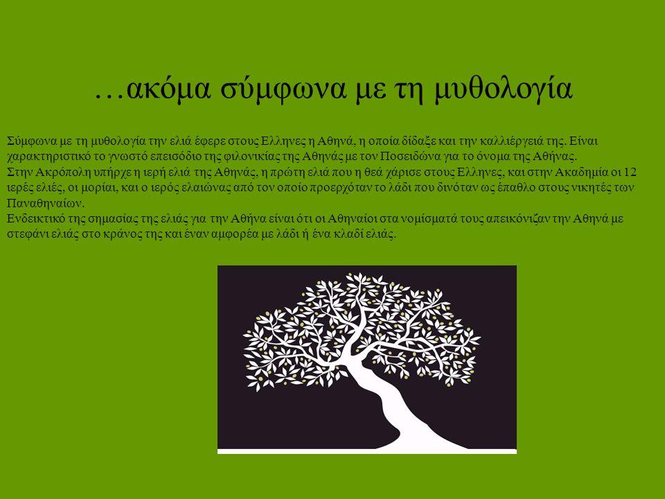 …ακόμα σύμφωνα με τη μυθολογία Σύμφωνα με τη μυθολογία την ελιά έφερε στους Ελληνες η Αθηνά, η οποία δίδαξε και την καλλιέργειά της. Είναι χαρακτηριστ