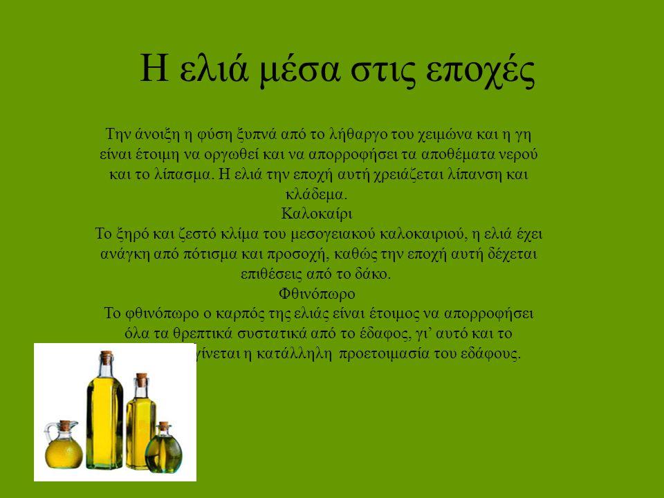 Τι παίρνουμε από την ελιά Όλοι γνωρίζουμε ότι από τον καρπό της ελιάς παίρνουμε το ελαιόλαδο.