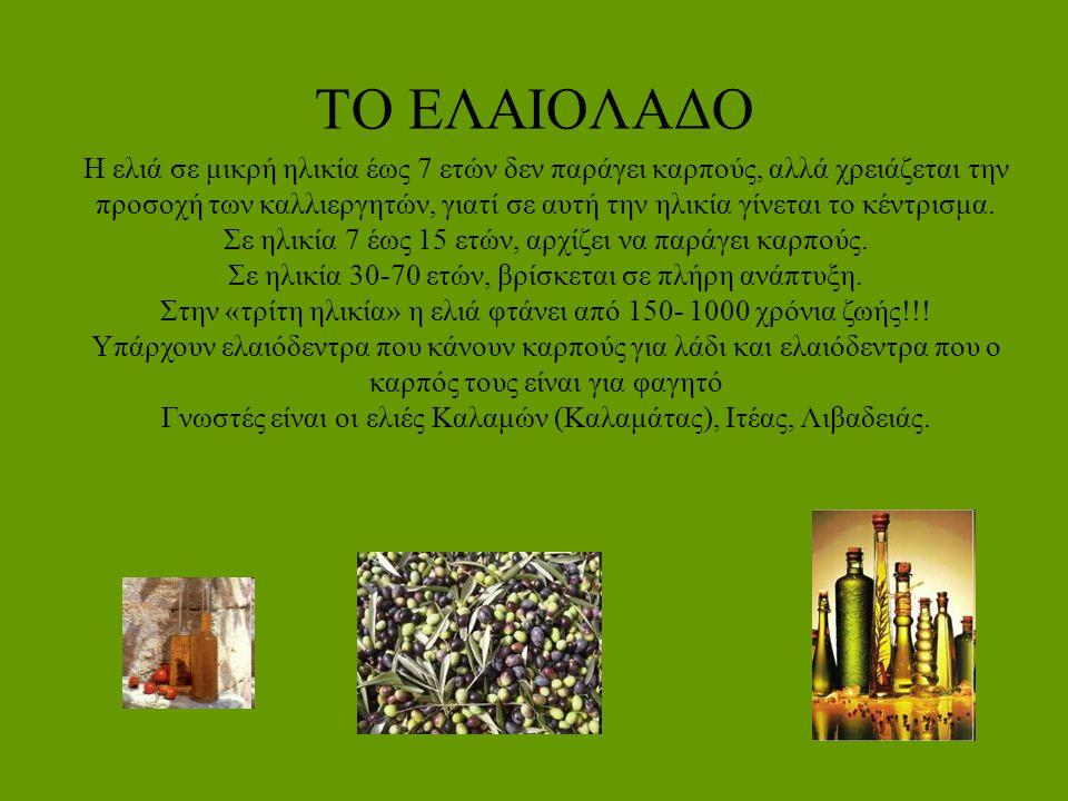 Η ΕΛΙΑ Καλλυντικό: Στην αρχαία Ελλάδα, χρησιμοποιήθηκε ως κύριο καλλυντικό.
