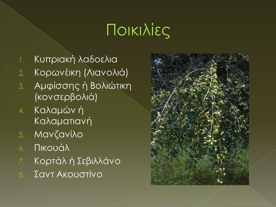 1. Kυπριακή λαδοελια 2. Kορωνέικη (Λιανολιά) 3. Aμφίσσης ή Bολιώτικη (κονσερβολιά) 4. Kαλαμών ή Kαλαματιανή 5. Mανζανίλο 6. Πικουάλ 7. Kορτάλ ή Σεβιλλ