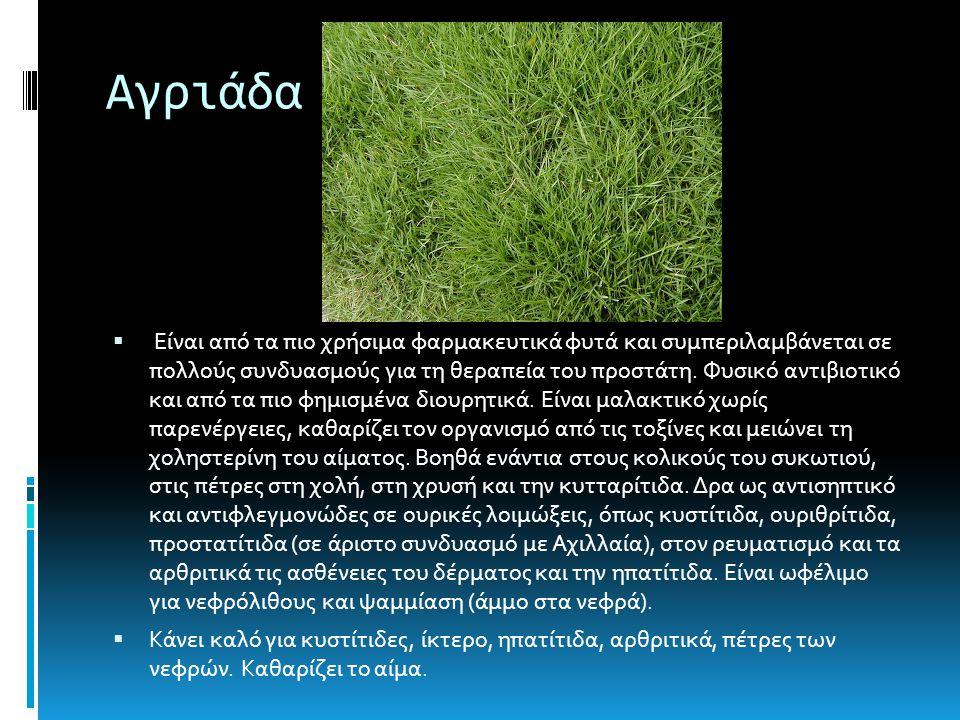 Αγριάδα  Είναι από τα πιο χρήσιμα φαρμακευτικά φυτά και συμπεριλαμβάνεται σε πολλούς συνδυασμούς για τη θεραπεία του προστάτη.
