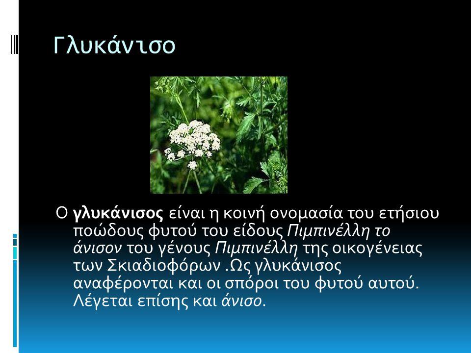Γλυκάνισο Ο γλυκάνισος είναι η κοινή ονομασία του ετήσιου ποώδους φυτού του είδους Πιμπινέλλη το άνισον του γένους Πιμπινέλλη της οικογένειας των Σκιαδιοφόρων.Ως γλυκάνισος αναφέρονται και οι σπόροι του φυτού αυτού.