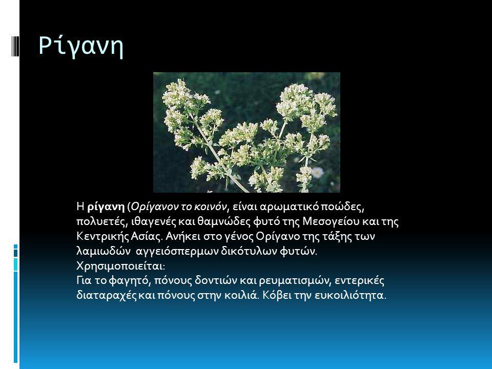 Ρίγανη Η ρίγανη (Ορίγανον το κοινόν, είναι αρωματικό ποώδες, πολυετές, ιθαγενές και θαμνώδες φυτό της Μεσογείου και της Κεντρικής Ασίας.