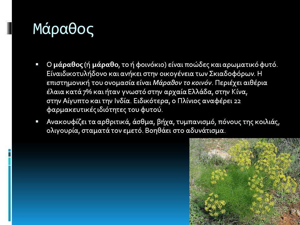 Μάραθος  Ο μάραθος (ή μάραθο, το ή φοινόκιο) είναι ποώδες και αρωματικό φυτό.