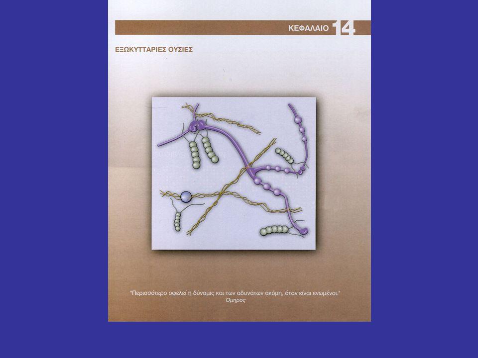 Γλυκοζαμινογλυκάνες + πρωτεΐνες = πρωτεογλυκάνες
