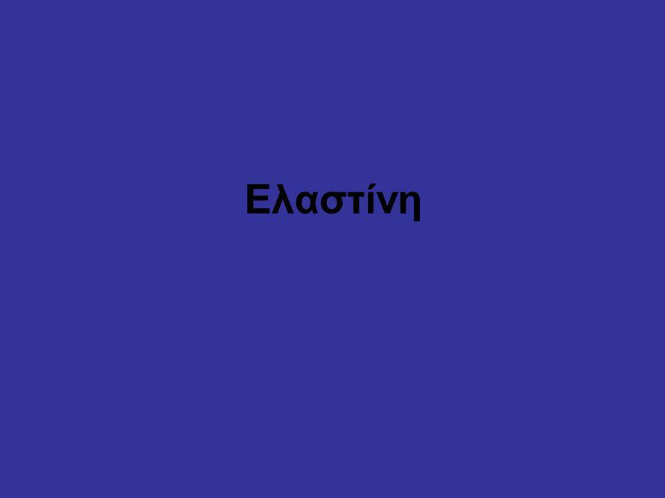 Ελαστίνη