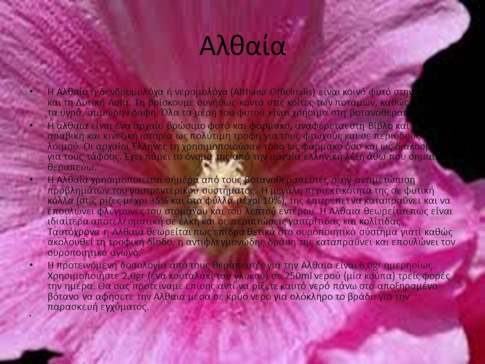Αλθαία H Αλθαία ή δενδρομολόχα ή νερομολόχα (Althaea Officinalis) είναι κοινό φυτό στην Ευρώπη και τη Δυτική Ασία. Τη βρίσκουμε συνήθως κοντά στις κοί