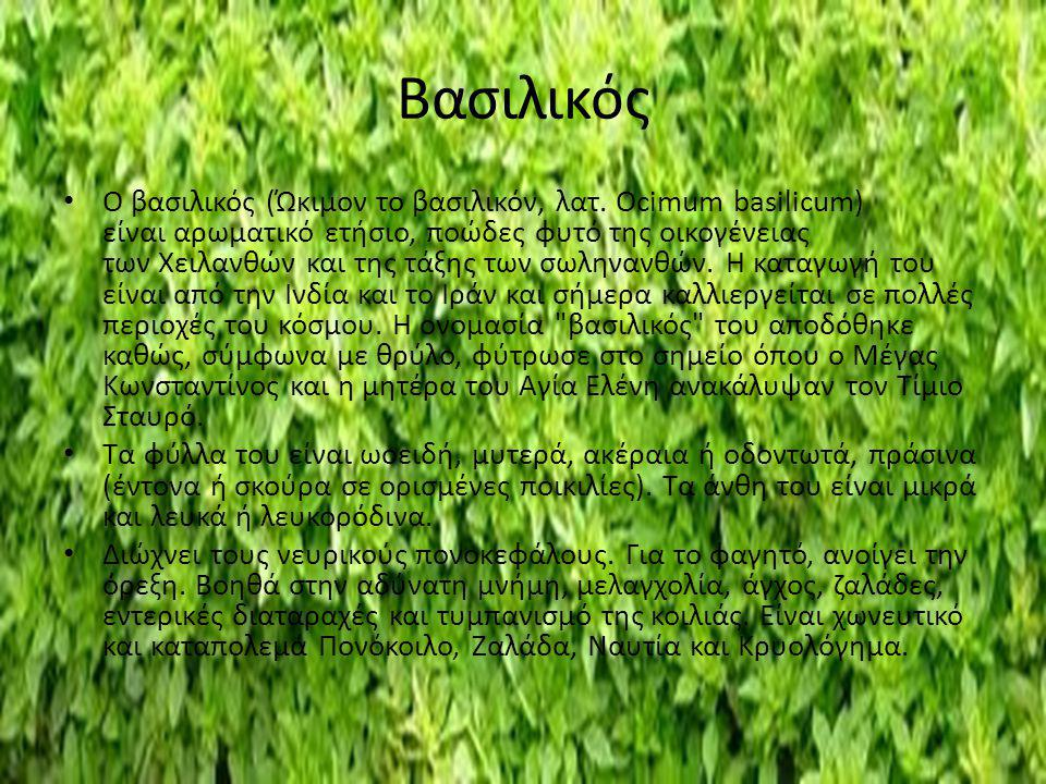 Βασιλικός Ο βασιλικός (Ώκιμον το βασιλικόν, λατ. Ocimum basilicum) είναι αρωματικό ετήσιο, ποώδες φυτό της οικογένειας των Χειλανθών και της τάξης των