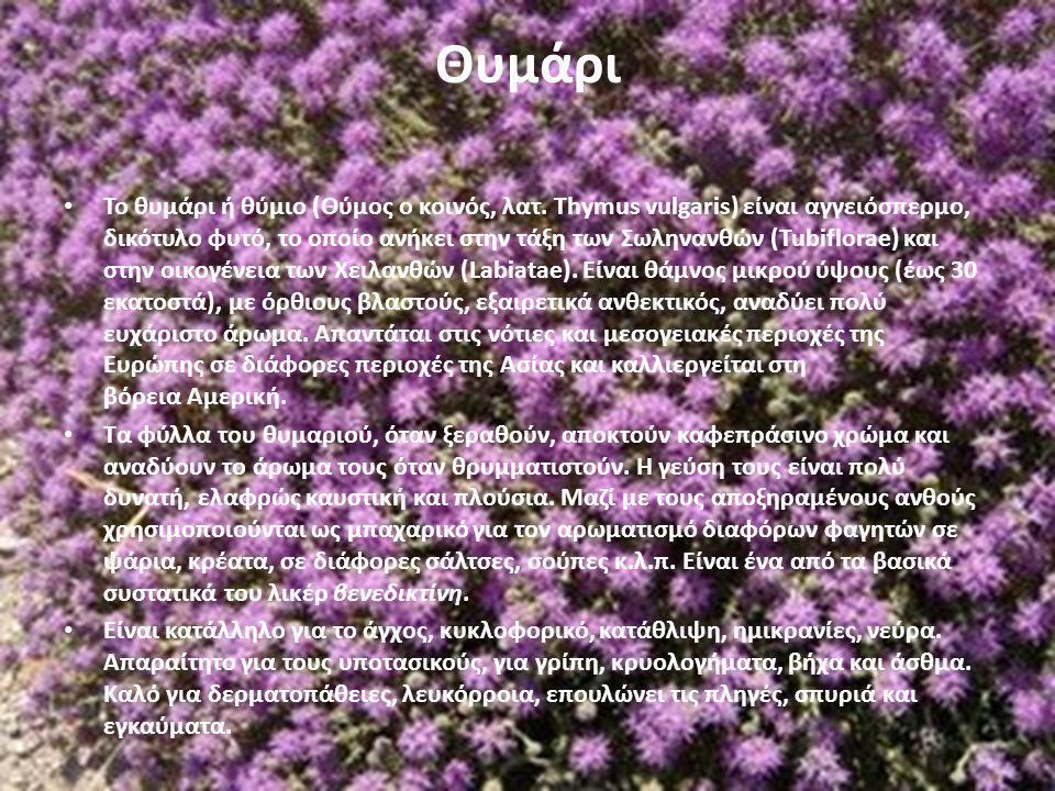 Θυμάρι Το θυμάρι ή θύμιο (Θύμος ο κοινός, λατ. Thymus vulgaris) είναι αγγειόσπερμο, δικότυλο φυτό, το οποίο ανήκει στην τάξη των Σωληνανθών (Tubiflora