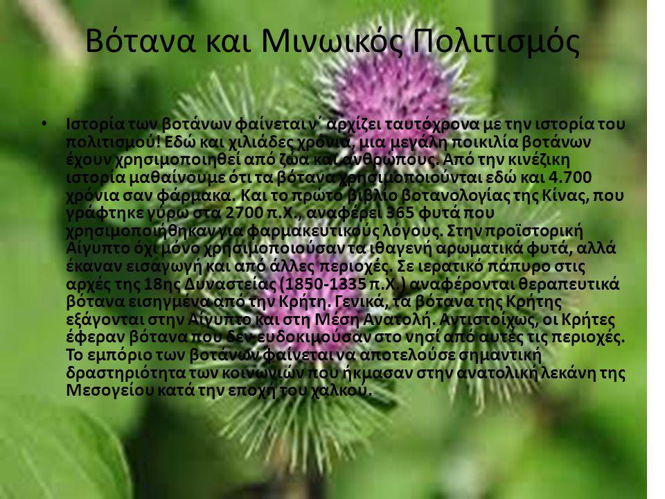 Βότανα και Μινωικός Πολιτισμός Ιστορία των βοτάνων φαίνεται ν΄ αρχίζει ταυτόχρονα με την ιστορία του πολιτισμού! Εδώ και χιλιάδες χρόνια, μια μεγάλη π