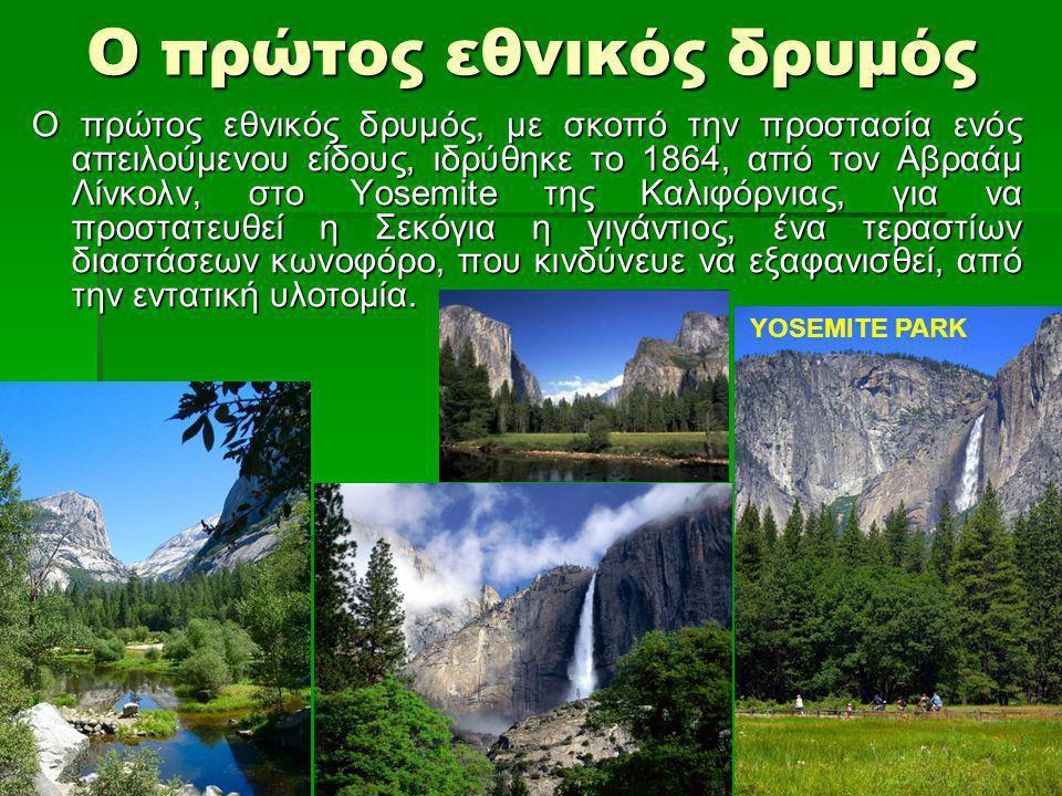 Ο πρώτος εθνικός δρυμός Ο πρώτος εθνικός δρυμός, με σκοπό την προστασία ενός απειλούμενου είδους, ιδρύθηκε το 1864, από τον Αβραάμ Λίνκολν, στο Yosemite της Καλιφόρνιας, για να προστατευθεί η Σεκόγια η γιγάντιος, ένα τεραστίων διαστάσεων κωνοφόρο, που κινδύνευε να εξαφανισθεί, από την εντατική υλοτομία.